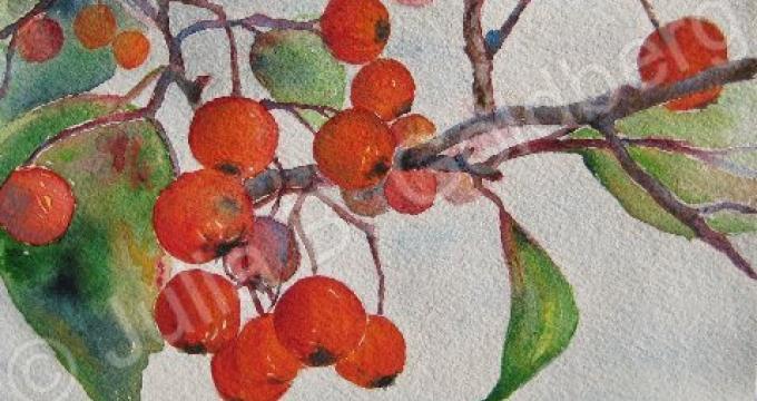 Crabapples (detail) Julia B. Goldberg Watercolor 4 x 6